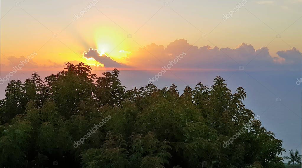 sunset on la reunion island with trees in foreground