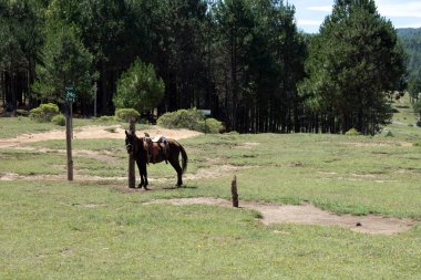 Horse hanging around in the middle of the valley