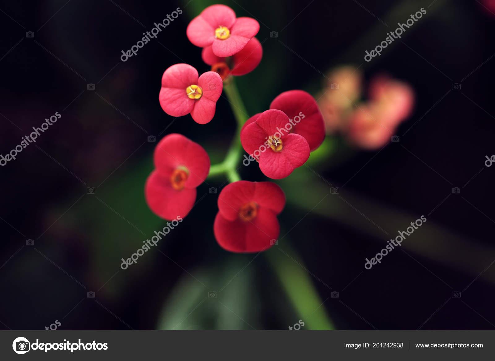 Fleur Rouge Exotique Dans Foret Tropicale Avec Des Plantes Vertes