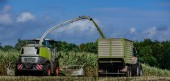 Fotografie Mais, landwirtschaftliche Tätigkeit für Ernte-Saison