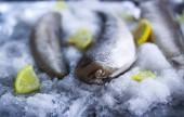 Friss nyers tengeri halat, a citromos peces jég felületén.