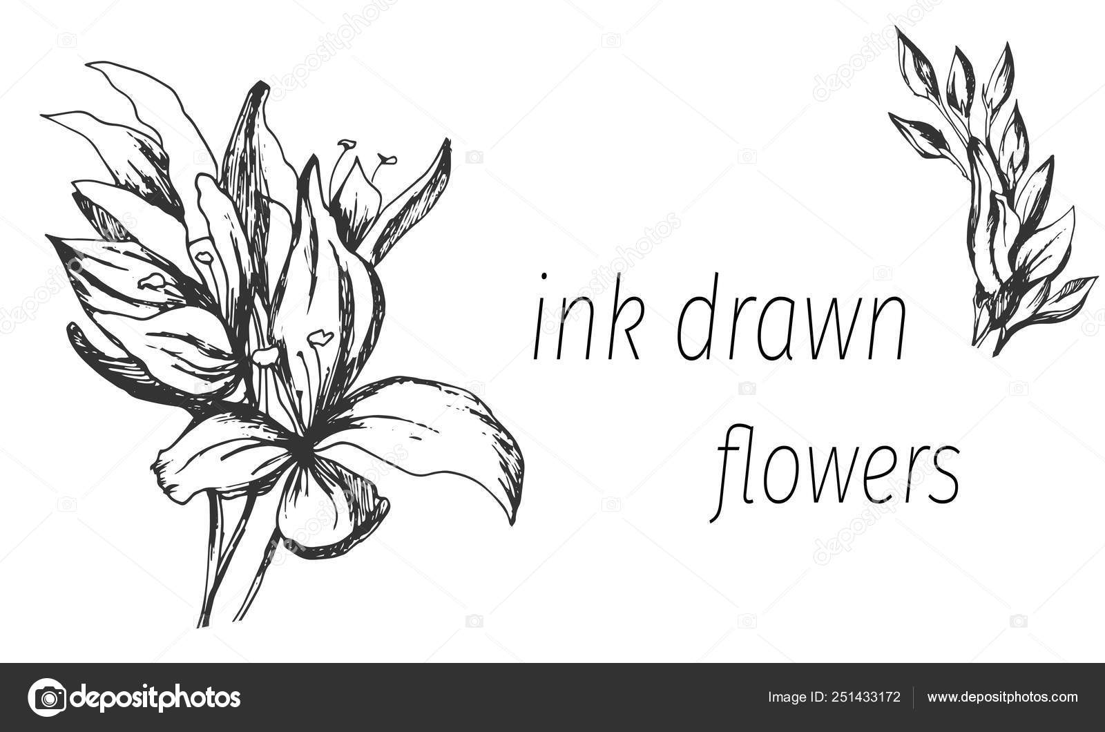 Clipart flowers outline