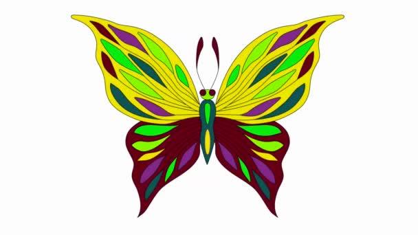 színes pillangó felső nézet változások színes videó