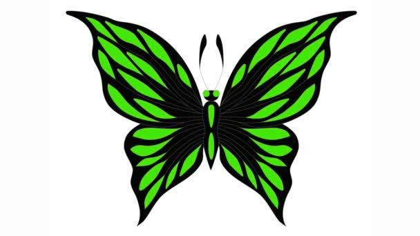 Multy barevný motýl horní pohled změní barvu videa