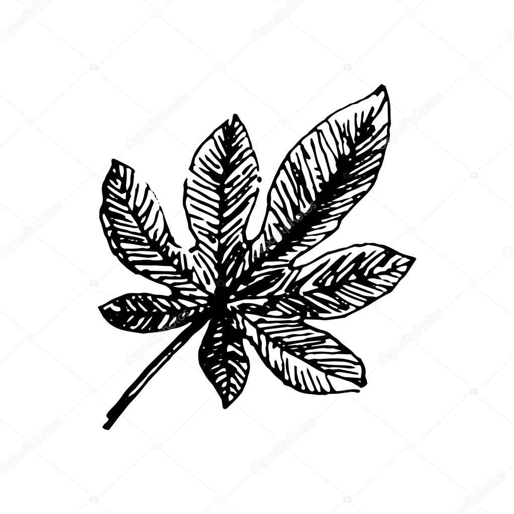 Vector illustration concept of Tropical leaf music instrument. Black on white background