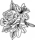 Kézzel rajzolt virágok a fehér izolált háttéren