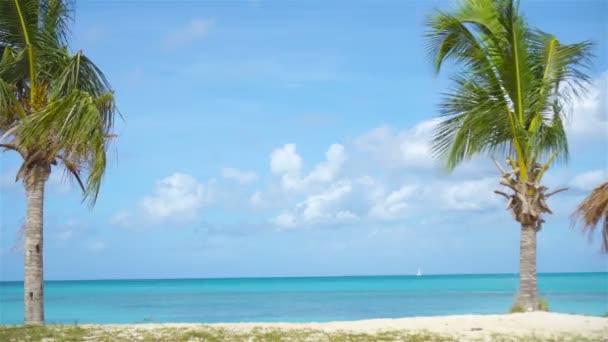 Dva velké palmy v modré Slunečné nebe