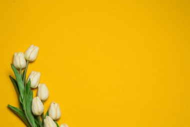 White tulips on a yellow background.