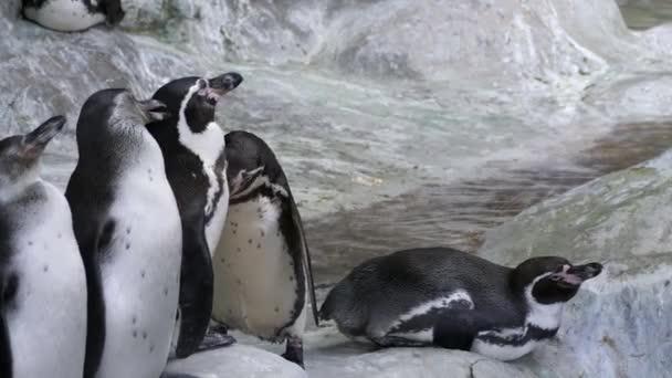 V zoo tuční zápasy. Muži pečující o ženskou