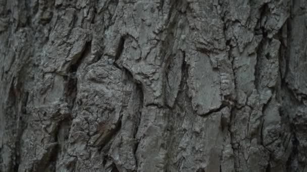 Textúra a fa kéreg. Textúra a fa kéreg. Fa törzs durva kéreg.