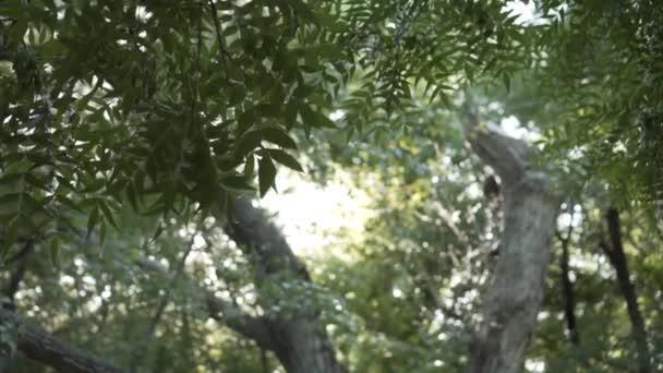 Natürlicher Hintergrund mit grünen Blättern auf einem Baumzweig. Blätter auf einem Baumzweig auf dem Hintergrund von Baumstämmen.