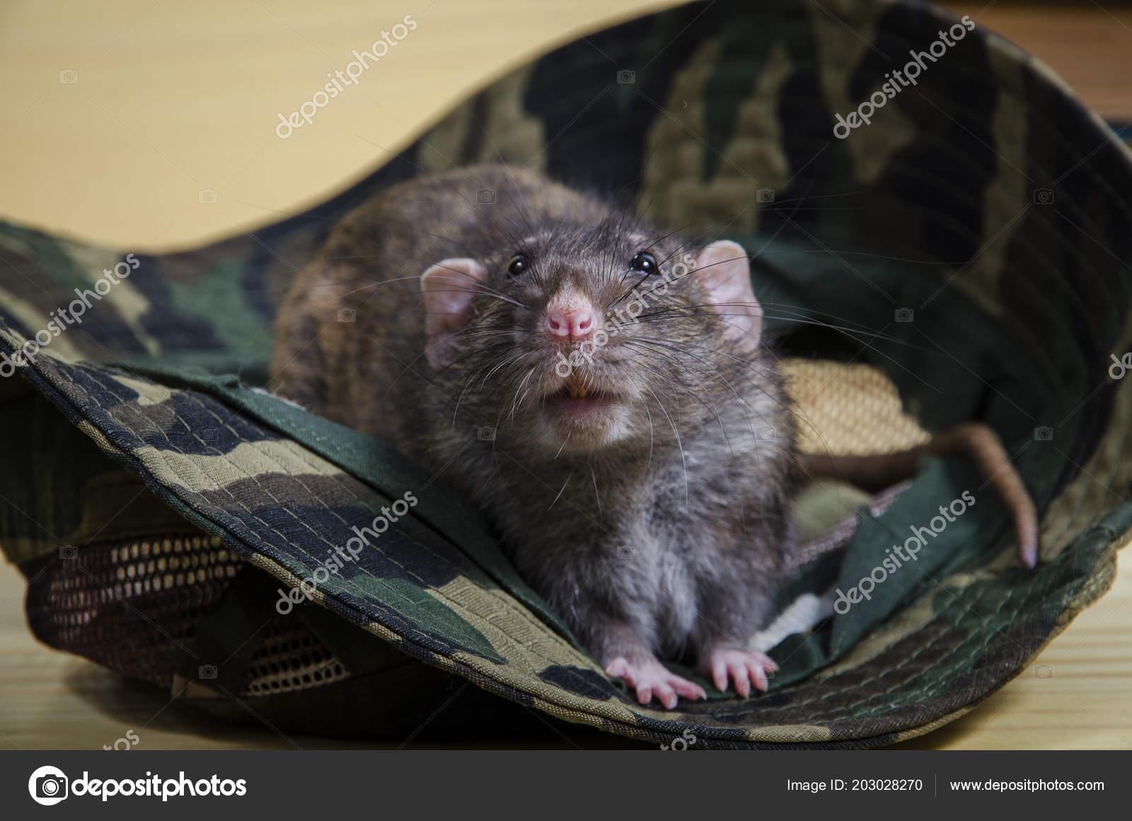 Цвета во сне крыс