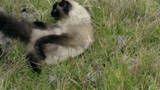 Woman patting cat