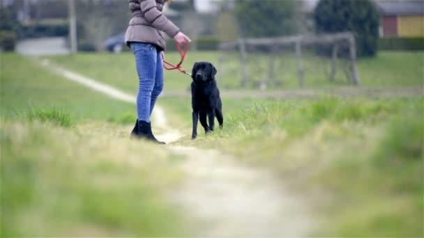 Person rewarding cute puppy on leash