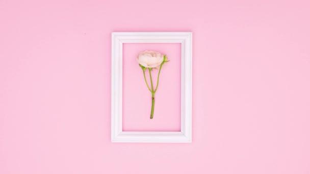 Schöne rosa Rosen und romantische Rahmen für Text auf rosa Thema. Stop-Motion