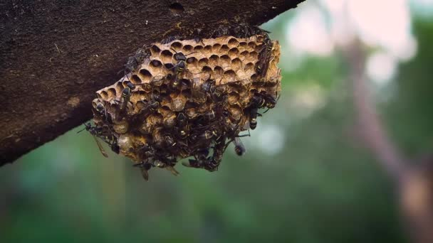 Extreme Close Up Of Wasp Nest And Trunk