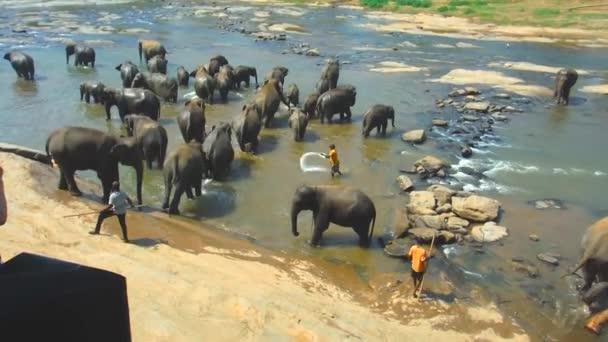 River of elephants Pinnawala wildlife reserve and animals orphanage in Sri Lanka