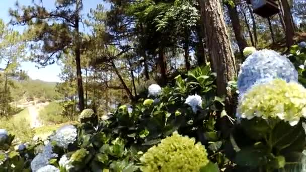 Meadow with flowers during spring.Video footage of meadow with flowers during spring.