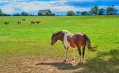 Kůň v Kentucky Horse Farm