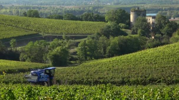 Sklizeň stroje v Gironde Bordeaux, vinice, Langoiran hroznů