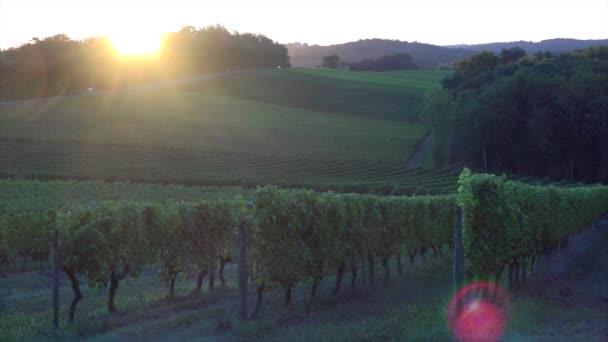 Vinice na šířku, vinic jižně od Francie, Sauternes, Loupiac, východ slunce