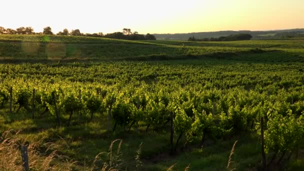 Západ slunce krajina bordeaux vinice Francie, Evropa Příroda