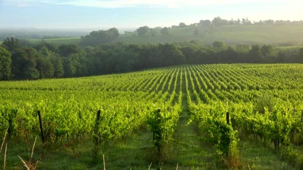 Západ slunce krajina a mlha, Bordeaux vinice, Langoiran