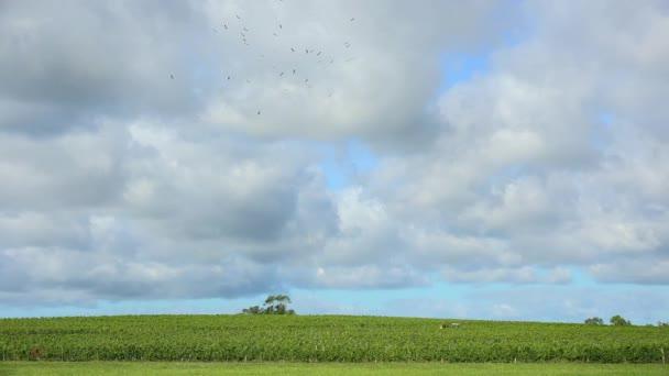 Fa gólya zenekar repülés az égen