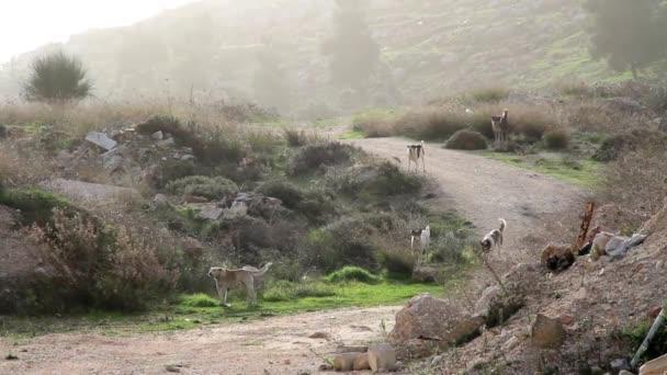 Házőrző kutya gyaloglás-ra országúton csoportja