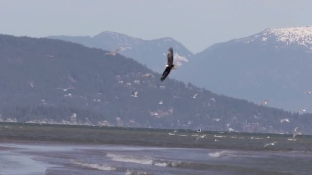 Festői kilátással a Bald Eagle repülés, Kanada