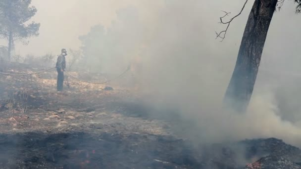Hasiči pracují poblíž vypalování lesů, Jeruzalém, Izrael