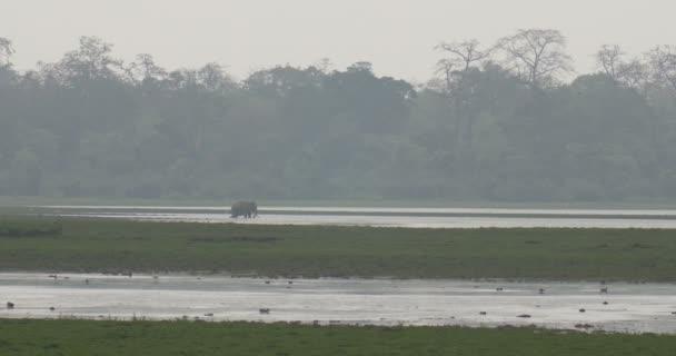 Vad elefánt, a tó, ranthambore nemzeti parkban, India