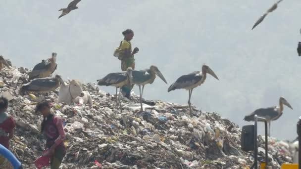 Indisches Mädchen stehend über Deponie in Guwahati dumps Website, Indien