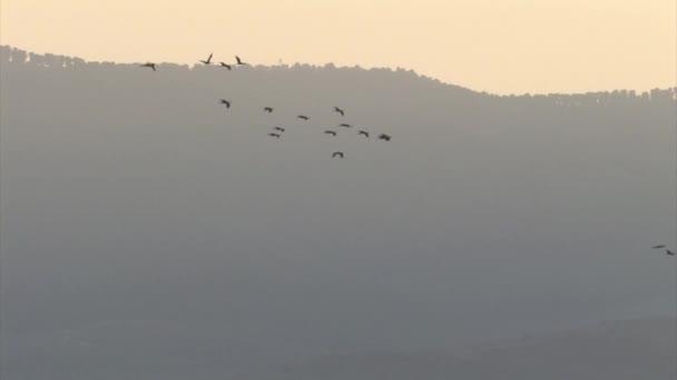 Kranichschwärme im Flug, Hula-Tal, Israel