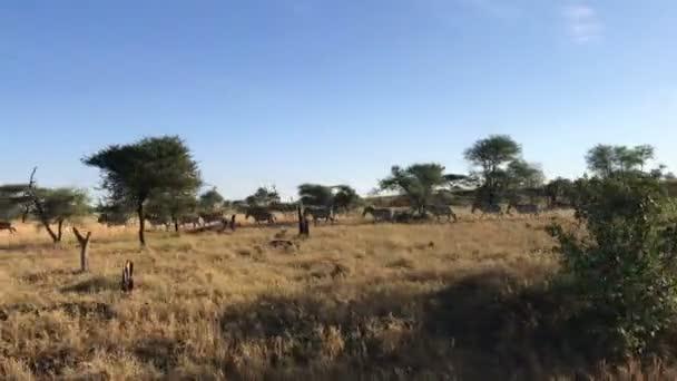 Zebre in esecuzione al Serengeti national park Tanzania