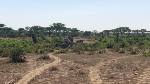 A Serengeti Nemzeti park Tanzánia elefánt család