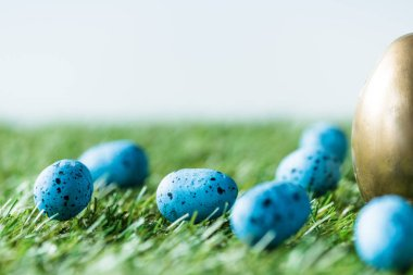 Selective focus of golden chicken egg, and blue quail eggs on green grass surface stock vector
