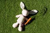 pohled na králíka a čerstvou mrkev na zeleném povrchu trávy