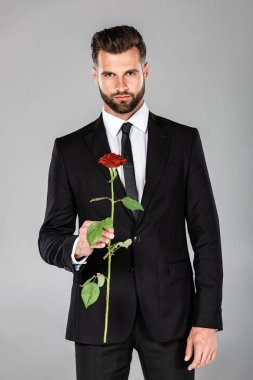 elegant handsome businessman in black suit with red rose isolated on grey