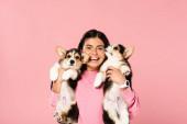 glückliche Frau hält niedliche Corgi Welpen, isoliert auf rosa