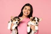Fotografia bella donna in possesso di simpatici cuccioli gallesi Corgi, isolato in rosa