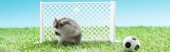 Photo panoramic shot of hamster near football gates and ball on green grass, sports betting concept