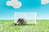 Photo funny hamster near toy soccer ball and gates on green grass on blue background with clouds, sports betting concept