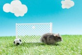 Photo little hamster near toy soccer ball and gates on green grass on blue background with clouds, sports betting concept
