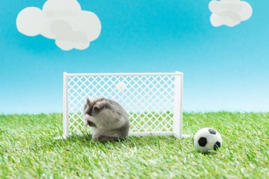 furry hamster near toy soccer ball and gates on green grass on blue background with clouds, sports betting concept
