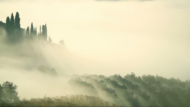 Mlha nad vinicí v Toskánsku