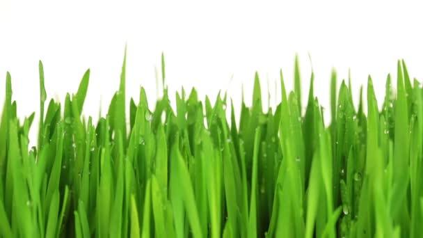 zelené trávy s kapky