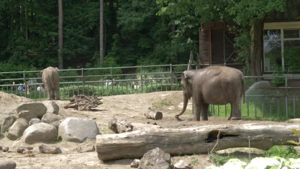 Gdansk, Lengyelország - 2017 május: Az ázsiai, illetve ázsiai elefánt (elephas maximus) a hűtés vízzel