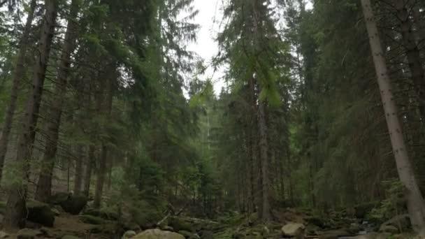 Divoký horský les s čistou vodou v potoce