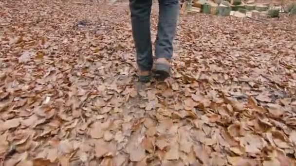 Procháza přes autumský les. Podzimní listy